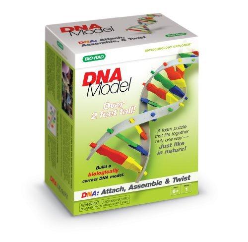 DNA Model Kit (Dna Model compare prices)
