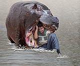 ぼくはこうやって野生動物におそわれた ~本当は危険な動物たち~