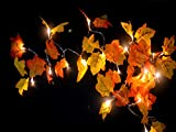 Gogo shopping 2 AA Battery Powered Lighted Fall Garland - 8.2 Feet - Shades of Orange and Yellow Leaves with 20 Lights - Perfect Fall Thanksgiving Decoration (Warm white)