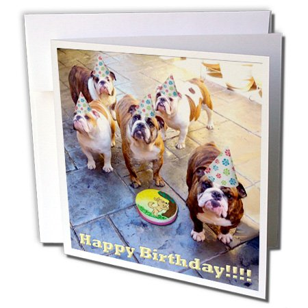 3dRose English Bulldog Birthday - Greeting Cards, 6 x 6 inches, set of 12 (gc_39567_2) (English Bulldog Birthday Card compare prices)