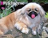 Just Pekingese 2014 Calendar