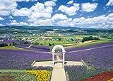 究極パズルの達人 3000ピース 花咲く富良野の丘-北海道 21-509