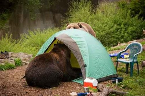 Animal Wall Decals Bear Tent Camp - 30 Inches X 20 Inches - Peel And Stick Removable Graphic
