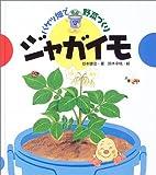 バケツ畑で野菜づくり ジャガイモ