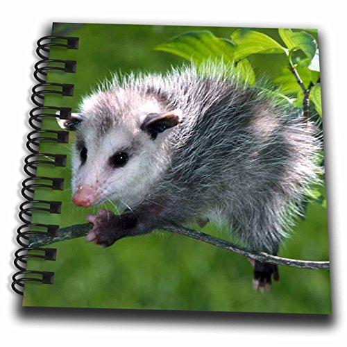 3dRose db_1009_3 Opossum-Mini Notepad, 4 by 4