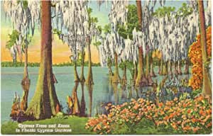 Com 1950s Vintage Postcard Cypress Trees In Florida Cypress Gardens