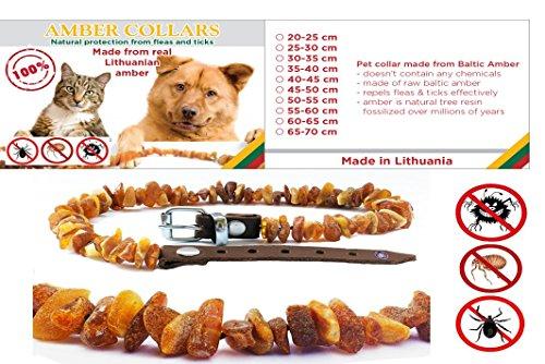 collana-di-ambra-per-cani-e-gatti-cintura-regolabile-facile-da-applicare-e-facile-da-pulire-vero-e-p
