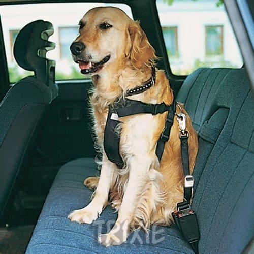 Auto-Sicherheitsgeschirre, Größe L, schwarz