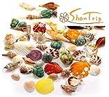 ShanTrip カラフル 貝殻 アソート セット 置物 オブジェ ハンドメイド DIY サンゴ シェル