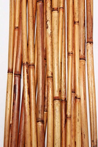 Green Floral Crafts Natural River Cane 6 Ft, Burnt Oak, Pack of 20