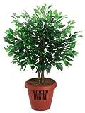 Amcor AM-70 Ficus Tree Air Purifier