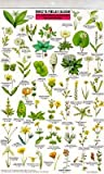 Northern-California-Wildflowers-Mac's-Guides-Flash-Cards