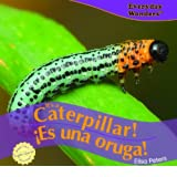 It's a Caterpillar!/Es Una Oruga! price comparison at Flipkart, Amazon, Crossword, Uread, Bookadda, Landmark, Homeshop18