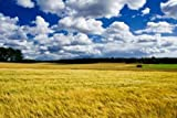 Sky Wall Decals Golden Ripe Barley Field Landscape - 48 inches x 32 inches - Peel and Stick Removable Graphic