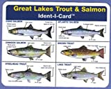Great Lakes Salmon and Trout Ident-I-Card - Freshwater Fish Identification Card