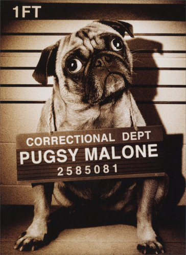 Pugsy Malone Funny Dog Birthday Card