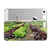 iPhone 5S Case SustainabieLivimg Kinvara SustainabieLivimg Sustainability Hard Plastic Cover for iPhone 5 Case
