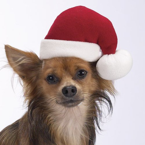 Holiday Santa Hat  - Small