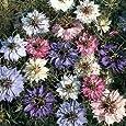500 MIXED COLORS LOVE IN A MIST PERSIAN JEWELS (Fennel Flower) Nigella Damascena Flower Seeds