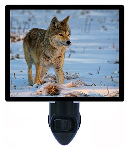 Night Light - Winter Hunt - Female Coyote front-1021252
