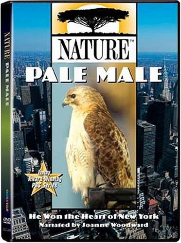 Nature - Pale Male front-417900
