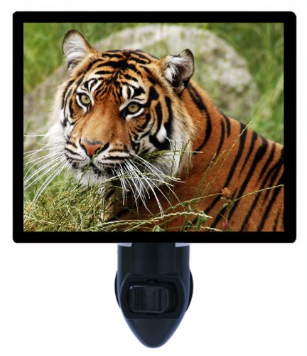 Tiger Night Light - Calm Tiger front-1040853