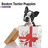 Magnet & Steel Ltd Boston Terrier Puppies 2015 Mini Calendar