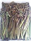 ド田舎直産 先行予約 朝採れたて天然山菜 わらび 1kg 5月下旬