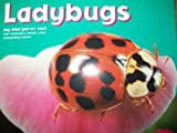 img - for Ladybugs [Scholastic] (Bugs, Bugs, Bugs!) book / textbook / text book