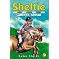 Sheltie Gallops Ahead