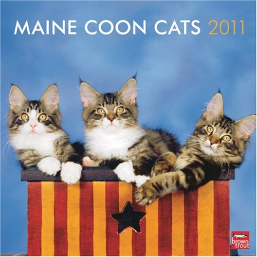 Maine Coon Cats 2011 Square 12X12 Wall Calendar (Multilingual Edition)