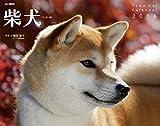 カレンダー2016 柴犬 (ヤマケイカレンダー2016)