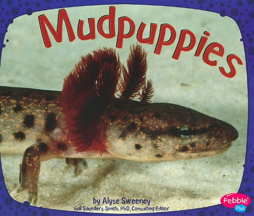 analysis and description of mudpuppies