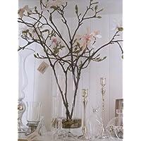 Tree Magnolia Arr In Footed Va