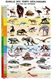 img - for Affiche Echelle des temps g  ologiques (French Edition) book / textbook / text book