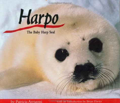 Harpo, the Baby Harp Seal