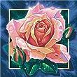 Schipper 609250409 - Malen nach Zahlen Rosa Rose, 40x40 cm