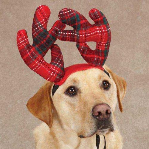 Large Dog Reindeer Costume
