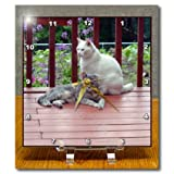 Beverly Turner Cat Photography - Tortoiseshell Cat and White Cat on Patio - Desk Clocks - 6x6 Desk Clock - dc_192624_1
