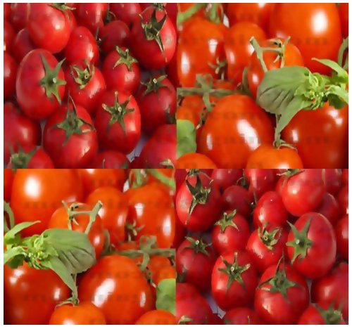 1/4 Oz (2,500+ Seeds) Large Red Cherry Grape Tomato Seeds Heirloom Sweet, Juicy, Bite Size ~ 1.25""