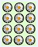 12x Daisy Design rice paper fairy cup cake 40mm toppers pre cut decoration Flowers