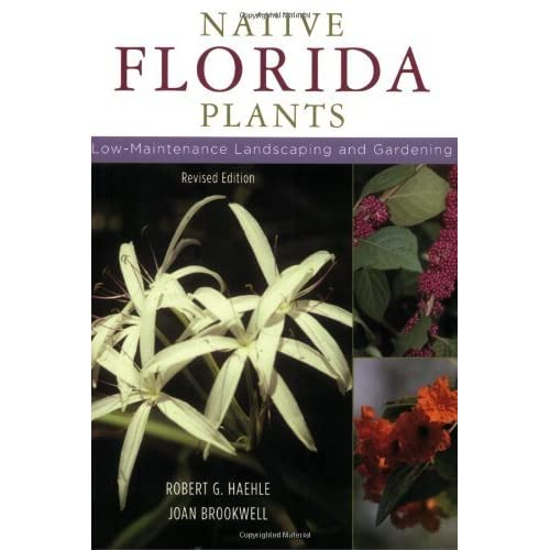 Native Florida Plants Low Maintenance Landscaping and Gardening