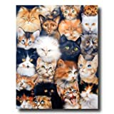 Cat Kittens Kitty Collage Kids Room Wall Picture 16x20 Art Print