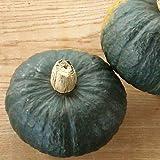 【送料無料】九重栗かぼちゃ 10kg 10月上旬発送予定 予約受付中