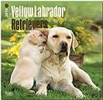 Labrador Retrievers, Yellow 2015 Squa...