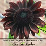 "15 Seeds, Sunflower ""Chocolate"" (Helianthus annuus) Seeds By Seed Needs"