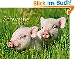 Schweine 2015