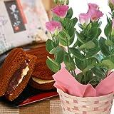 【送料無料!敬老の日ギフト】トルコキキョウ(ピンク)鉢植と黒どら焼きのセット