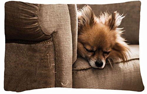 Microfiber Peach Queen Size Decorative Pillowcase -Animals Dog Puppy S Chair Sleeping Furry front-820622