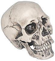Realistic Skull from SUNSTAR INDUSTRIES INC